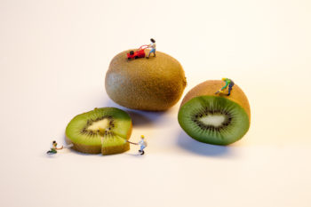 Gardening With Fruits | Miniaturaufnahmen